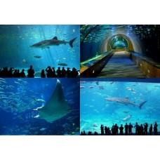 10 самых больших аквариумов в Мире!